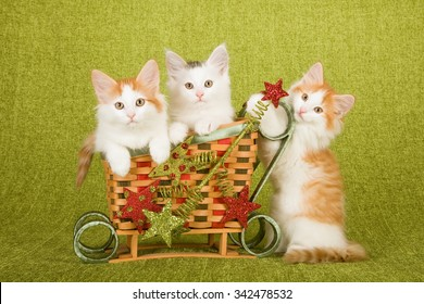 Norwegian Forest Cat kittens sitting inside miniature bamboo Christmas XMas sleigh decorated with glitter ornaments on green background