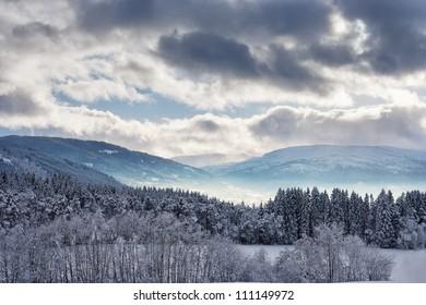 Norwegian forest landscape