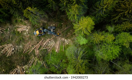 Norwegian foresting, logging, drone shot from above