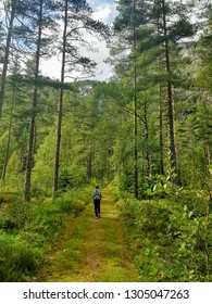 Norwegians woods, early fall 2018. Beautiful weather and colours, Nice hike, large threes, mindfull, silent atmosphere.
