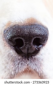 nose of a dog , macro shot , focus on center