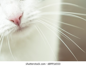 Nose and mouth of a cat, close-up. Kitty pink nose closeup showing whiskers and chin. Nose of cat closeup. Feline nose macro. A cat's muzzle. Tabby Feline close up photo. Cute kitten noses closeup.