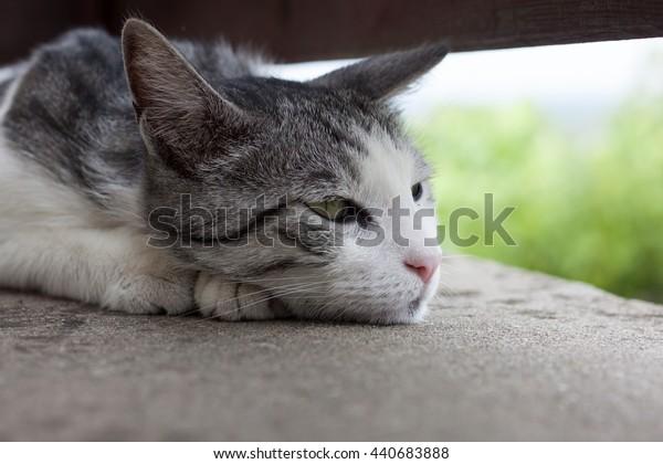 Nostalgic cat