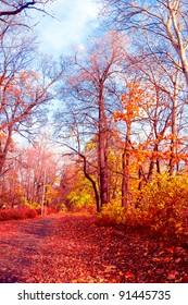 Nostalgic Scene Sunlit Foliage