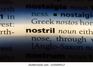 nostril word in a dictionary. nostril concept.