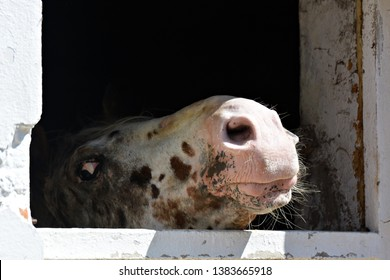 Nostrils of a beautiful horse