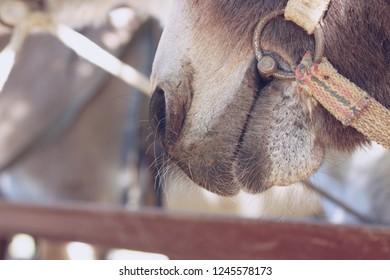 Nostrils donkey, close-up.
