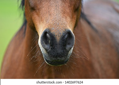 Nostrils of a healthy beautiful horse