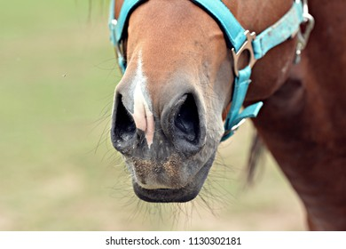 The nostrils of the horse