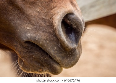 Nostrils, nose, muzzle of the horse as a background, backdrop or wallpaper. Shooting close-up.