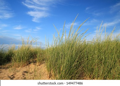 Nothing But Blue Skies. Dune grass set on a sandy beach with a gorgeous blue sky background. Port Crescent State Park. Port Austin, Michigan.