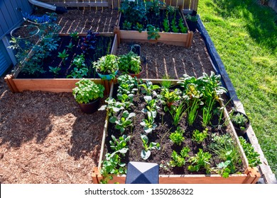 Nothing is fresher than food from your own garden. Planted in spring, this urban raised garden bed is loaded with a variety of herbs and vegetables ready to be harvested in summer.