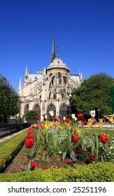 Notre dame in Spring, Paris