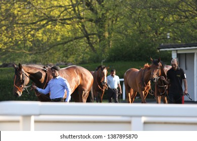 NOTTINGHAM RACECOURSE, COLWICK PARK, NOTTS, UK : 20 APRIL 2019 : The tranquil and peaceful sight of racehorses being led around the Pre Parade Ring before racing at Nottingham Races