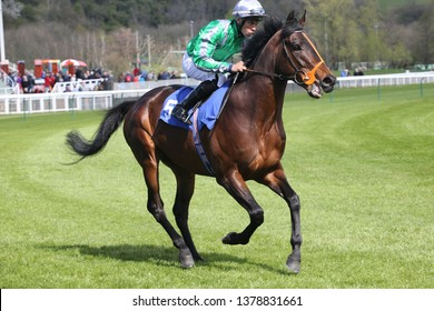 NOTTINGHAM RACECOURSE, COLWICK PARK, NOTTINGHAM, UK : 10 APRIL 2019 : Racehorse King Of Change ridden by Sean Levey goes to Post before winning the 3yo Novice Stakes at Nottingham Races