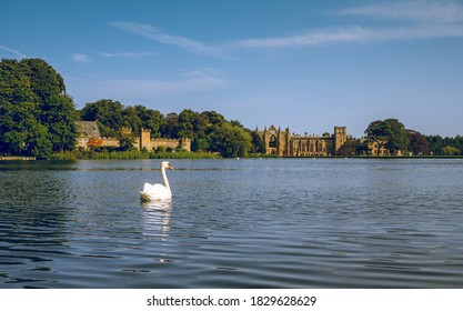 Nottingham, UK - September13 2020 : A beautiful swan in the lake with Newstead Abbey Castle in the background