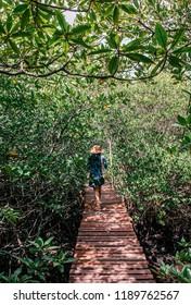NOV 11, 2013 Samui, Thailand - Asian woman walking along Koh Tean wood bridge in lush natural mangrove forest near Samui island in summer, Thailand tropical island forest