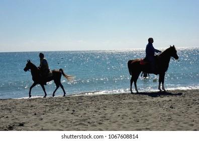 Nova Siri, Matera, Basilicata - Sept. 28, 2014: two of the many horses that morning strolled on the beach