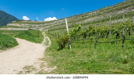 the Novacella vineyards in spring, Bolzano, Italy
