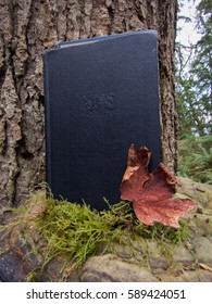 Novel resting on a tree with a maple leaf