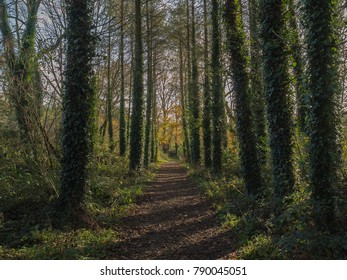 November 17th, 2017, Blarney, Ireland. Walkway Lane Path With Green Trees in Forest  in Blarney gardens. Beautiful Alley, road In Park. Way Through Summer Forest. Ireland.