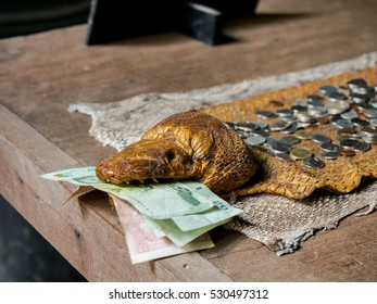 November 26, 2016 : The Snake Head Skin is holding the Thai Bank note at Ban Dum, the architecture with dark tone art, Chiang Rai, Thailand