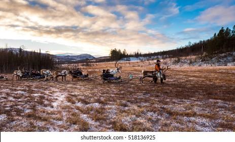 November 8, 2016, Norway, Troms  Reindeer trekking tour with Sami tour operator Tromso Lapland