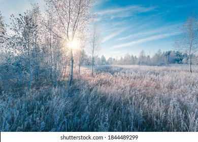 November dreamy frosty morning. Beautiful autumn misty cold sunrise landscape in blue tones. Fog and hoary frost on a scenic high grass copse.