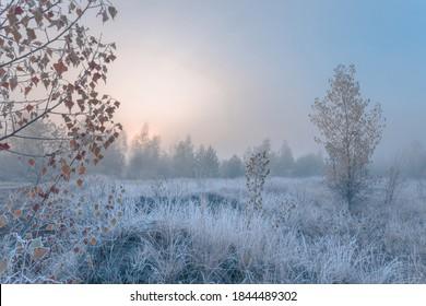 November dreamy frosty morning. Beautiful autumn misty cold sunrise landscape in blue tones. Fog and hoary frost at scenic high grass copse.