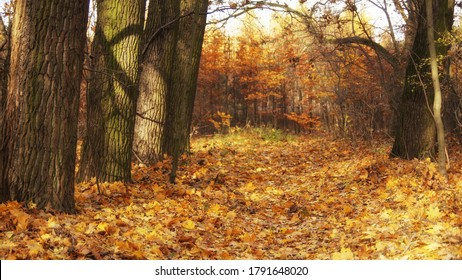 November in the forest, autumn morning walk, landscape with fallen leaves, sunny day