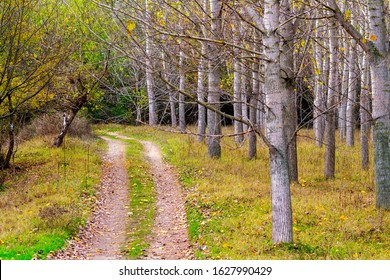 November forest landscape at Zlato Pole or Gold Field Protected Area, Municipality of Dimitrovgrad,Haskovo Province, Bulgaria, selective focus, shallow depth of field - Shutterstock ID 1627990429