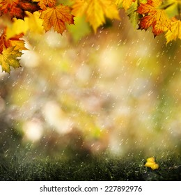 November rain. Beauty autumnal backgrounds with falling leaves for your design