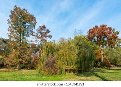 Novi Sad, Serbia - October 28, 2019: A beautiful park (Futoški park: serbian) in Novi Sad, Serbia in autumn.