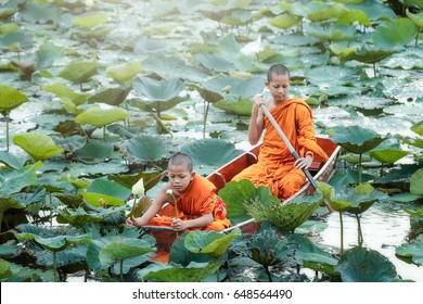 Novice on boat collecting lotus in pond.