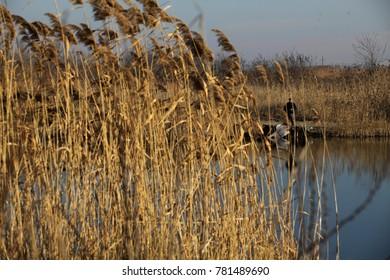 Novo Selo, Serbia - December, 25. 2017, Fishermens hunting fish on lake