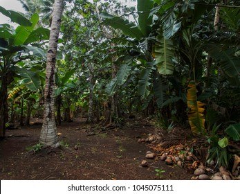 The now overgrown runway from the former Japanese airfield on Eten Island in Chuuk State (also known as Truk Lagoon).