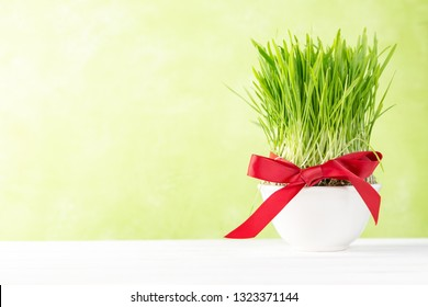 Nowruz holiday concept - grass, baklava sweets, nuts and seeds, copy space
