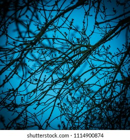 Nude branch on a blue sky
