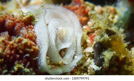 Nudibranch's Eggs on Coral