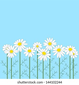 Number of chamomile flowers on a blue background