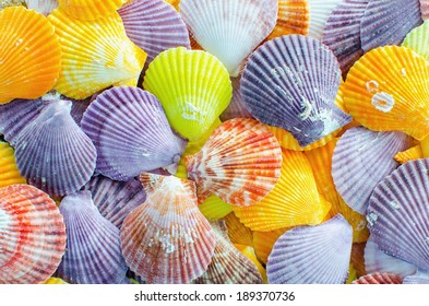 A number of Colorful Scallop seashell  background