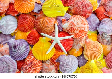 A number of Colorful Scallop seashell and sea star or starfish background