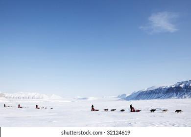 A number of dogsleds on a barren winter landscape