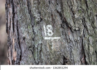 Number eighteen on a tree trunk put with white paint. Texture with bark of a tree and number eighteen of white color a close up macro horizontally. Copy space