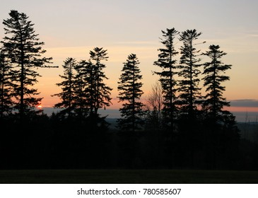 A number of firs on the horizon at sunset