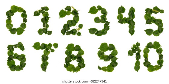 Numbers from leaves and flowers lime