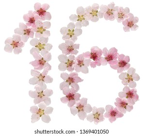 Numeral 16, sixteen, from natural pink flowers of peach tree, isolated on white background
