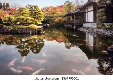 Numerous Koi Fish in the pond in autumn at the beautiful Koko-en Gardens, a classic Edo Style Japanese Garden in Himeji, Japan.