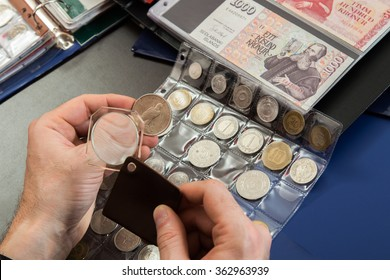Numismatist examines  collection of coin