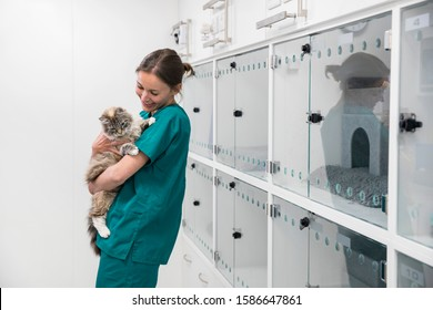 Nurse holding pet cat in recovery room of vet surgery